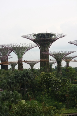 Gardens By The Bay During DAy